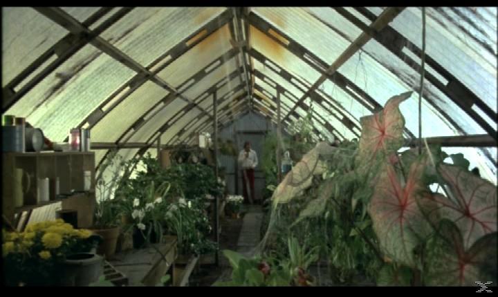 Die Frösche - (Blu-ray + DVD)
