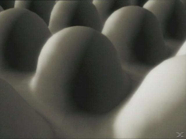 Universum - Grenzen der Wahrnehmung - (DVD)