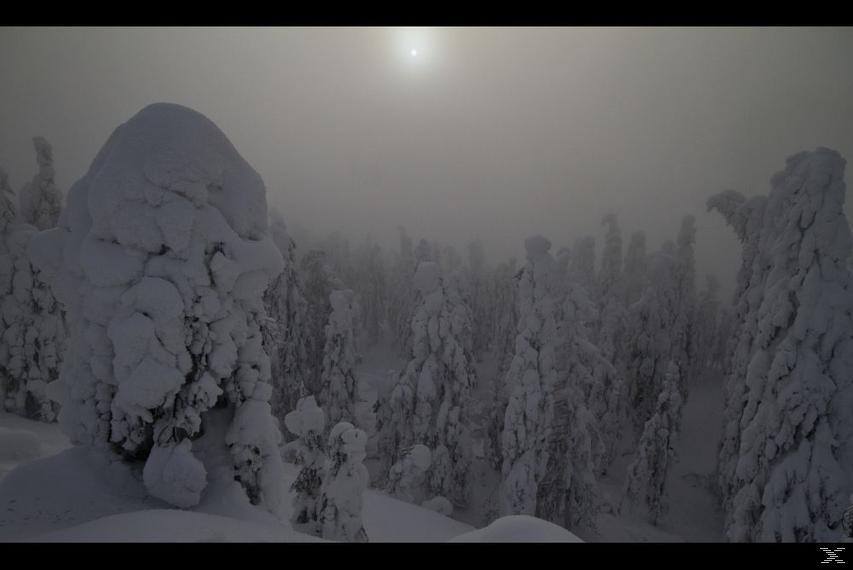 Wunder des Waldes - Tale of a forest - (DVD)