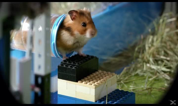 Rettet Raffi! - Der Hamsterkrimi - (DVD)