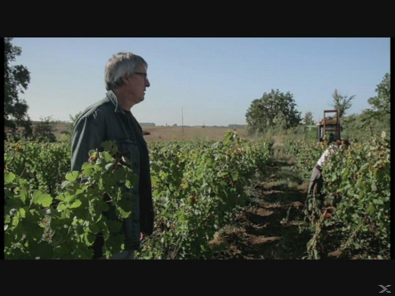 Von Trauben und Menschen - (DVD)