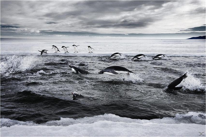 Last Ocean - Paradies am Ende der Welt - (Blu-ray)