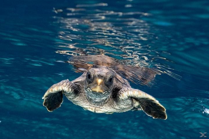Tortuga - Die unglaubliche Reise der Meeresschildkröte [Blu-ray]