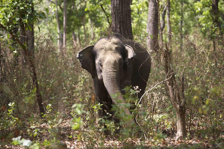 Indien 3D - Auf den Spuren des Tigers - (3D Blu-ray)