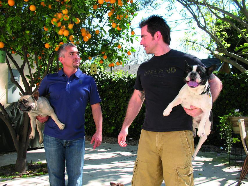 Der Hundeflüsterer - Staffel 3 - (DVD)