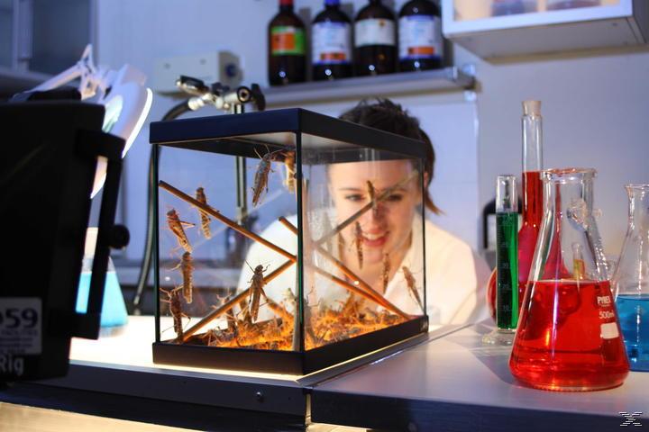 Big Bugs 3D - Kleine Krabbler ganz groß - (3D Blu-ray)