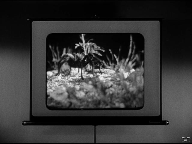 Tarantula - (DVD)