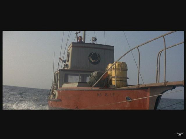 Der weiße Hai - Special Edition - (DVD)