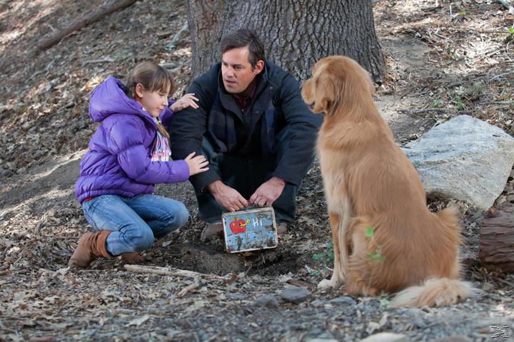 Eine Tierische Bescherung - (Blu-ray)