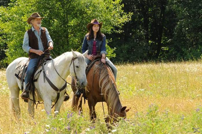 Midnight Stallion – Der König der Pferde [DVD]