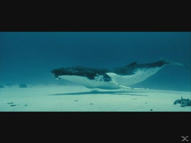 Unsere Ozeane - (DVD)