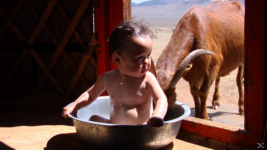 Babys - (DVD)