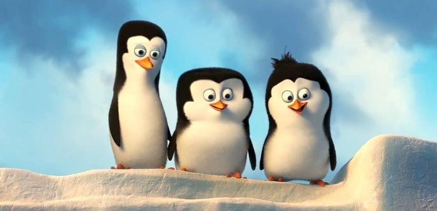 Οι Πιγκουίνοι της Μαδαγασκάρης DVD