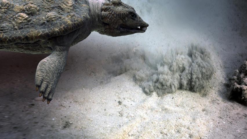 IMAX: Sea Rex 3D - Reise in die Zeit der Dinosaurier - (3D Blu-ray (+2D))