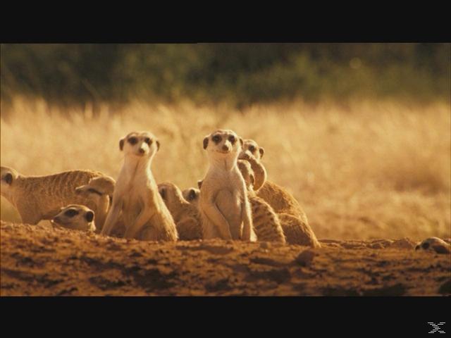 Wächter der Wüste [DVD]