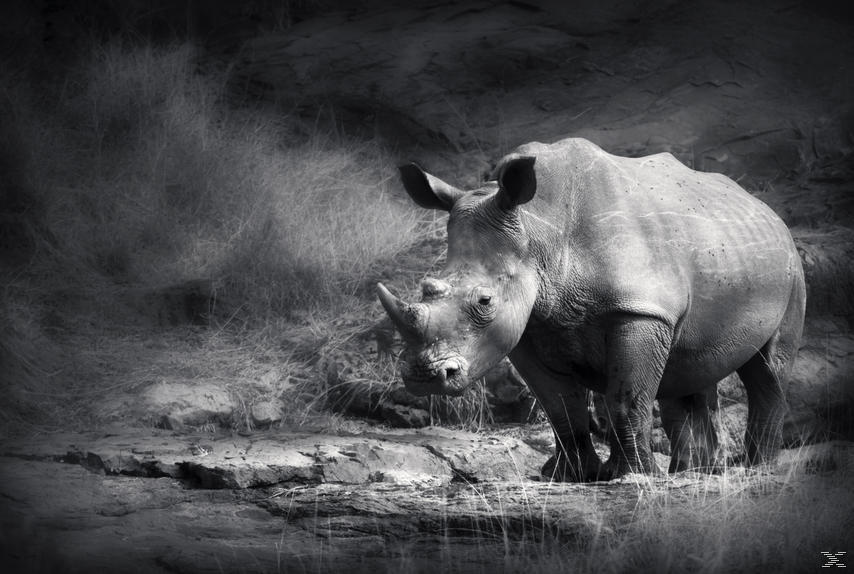 Racing Extinction - Das Ende der Artenvielfalt? - (DVD)