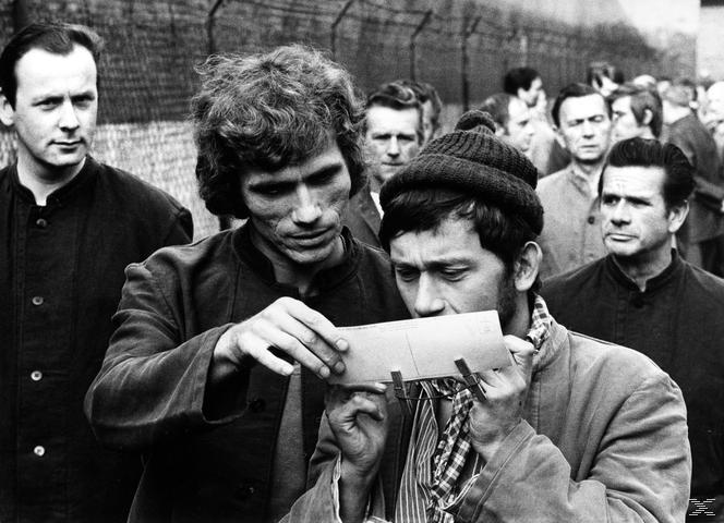 Die Verrohung des Franz Blum - (DVD)