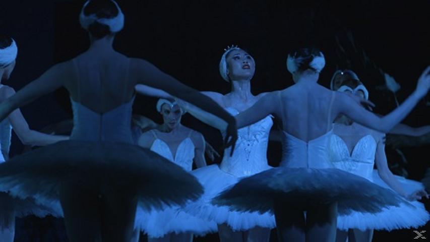 Maiko - The Dancing Child - (Blu-ray)