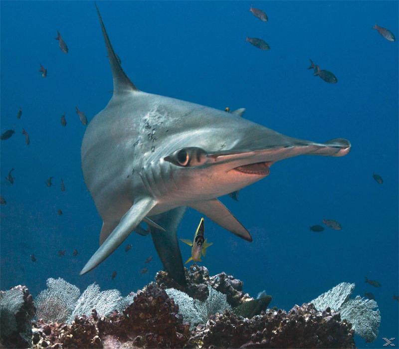 Räuber der Ozeane 3D [3D Blu-ray (+2D)]