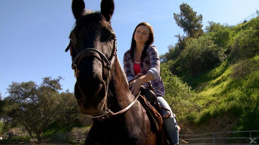 Das Geheimnis des Ponys - (DVD)