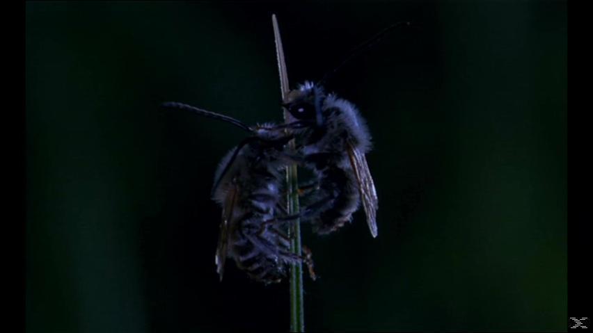 Mikrokosmos - Das Volk der Gräser [DVD]