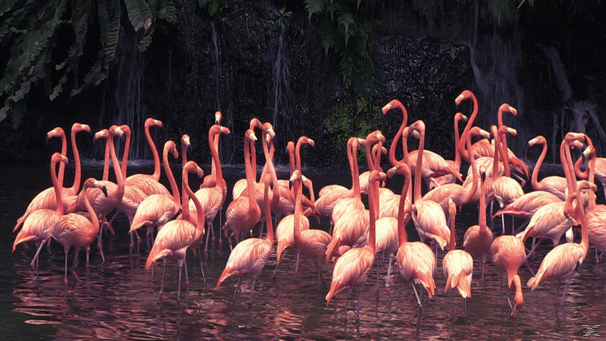 Birdpark 3D – Das Paradies der Vögel - (3D Blu-ray)