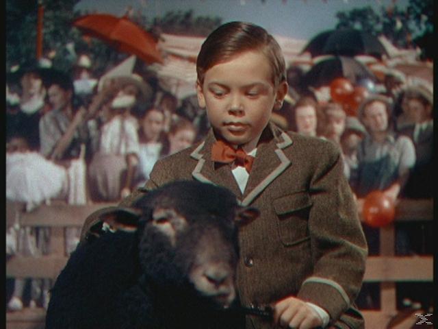 Danny le petit mouton noir - DVD